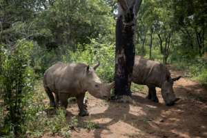 A unique centre hidden away in South Africa is dedicated to rehabilitating rhino orphans.  By Michele Spatari (AFP)