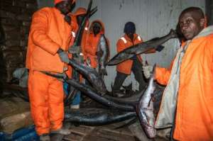 Agents of the Sierra Fishing Company and a police officer inspect one of the cold rooms stocked with fish during the ban.  By Saidu BAH (AFP/File)