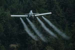 Air support: A plane sprays pesticides over locust-covered trees in Meru. The poison is not exclusive to pests, as bees, butterflies and other friendly insects are also killed. But it is designed to break down quickly and lose toxicity within a day.  By Yasuyoshi CHIBA (AFP)