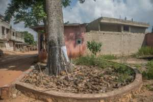 An iroko tree, where people people in Porto-Novo make offerings to Ogou, the god of metal. If a loved-one dies from contact with metal, such as in a car accident or a shooting, relatives hang up a garment of the victim to ease the god's anger..  By Yanick Folly (AFP)