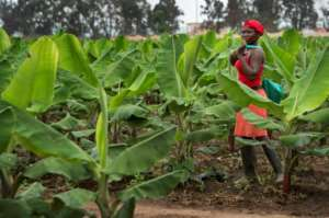 Angola is aiming to expand its agricultural sector, which could provide many with employment.  By Rodger BOSCH (AFP)