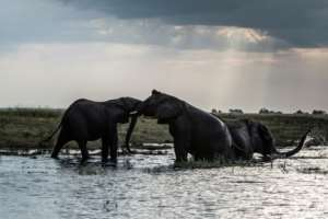 Botswana mulls reviewing a 2014 ban on hunting for sport.  By Chris JEK (AFP/File)