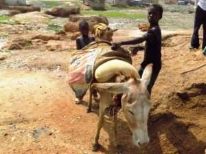 Boys work with their precious donkey at an excavation site in the far northern state of Kano, digging sand for market. Locals are alarmed that the donkey hide trade has led to soaring prices for working animals