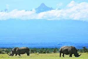 By 2008 the northern white rhino was considered extinct in the wild.  By TONY KARUMBA (AFP/File)