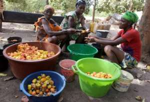 Cashew nuts are Guinea-Bissau's main export. By SEYLLOU (AFP/File)