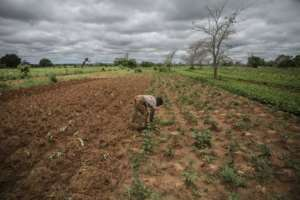Climate resilience: Small farmer and single mother Imelda Hicoombolwa sows cowpeas and other crops that are less thirsty than corn -- they have a better chance of surviving in the relentless drought.  By Guillem Sartorio (AFP)