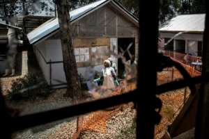 Dangerous times: Health workers are pictured through a bullet-holed window at an Ebola treatment centre in the eastern DR Congo city of Butembo. The facility was attacked twice in early 2019 by armed men hostile to its work.  By JOHN WESSELS (AFP)