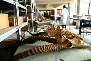 Despite its wealth of fossils, the Nairobi National Museum lacks specialists and resources. Staff say Kenya does not offer courses in paleontology and does not prioritise the science.  By SIMON MAINA (AFP)