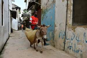 Donkeys are one of the main means of transport in Lamu town.  By TONY KARUMBA (AFP)