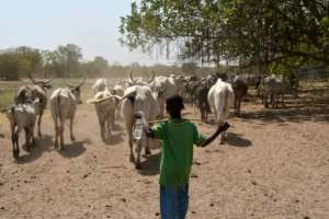 Dozens of people died in clashes between crop growers and nomadic herders over land access.  By Sia KAMBOU (AFP)