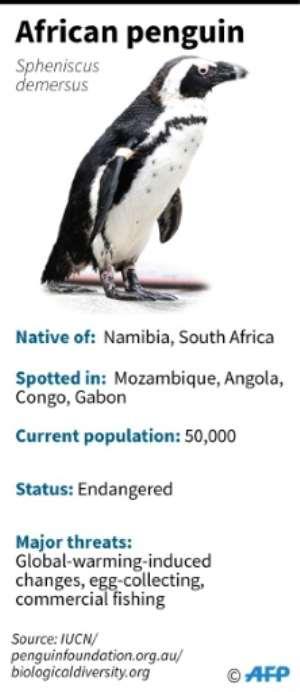 Fact file on the African penguin.  By John SAEKI (AFP)