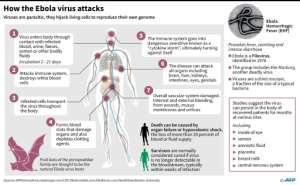 Factfile on the Ebola virus. By John Saeki/Adrian Leung (AFP)