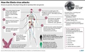 Factfile on Ebola. By John Saeki/Adrian Leung (AFP)
