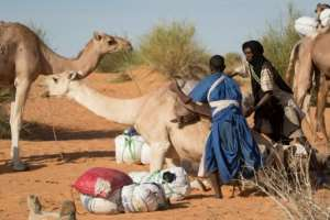 Farming and animal husbandry are crucial to the local economy on Mauritania's border with Mali.  By Thomas SAMSON (AFP)