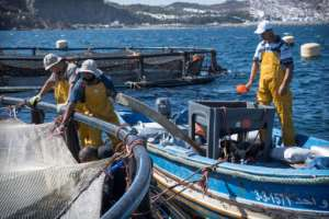 Fishermen work on a fish farm off the Moroccan city of M'diq on the Mediterranean.  By FADEL SENNA (AFP)