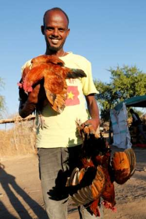 For some Ethiopian refugees in Sudan, the cost of a whole goat was too much, so some clubbed together to buy a chicken.  By ASHRAF SHAZLY (AFP)