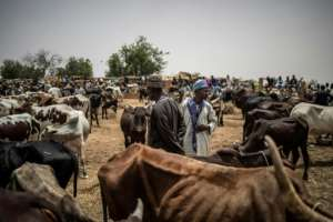 For sale: Fulani herders gather at the N'gonga cattle market near Dosso.  By Marco LONGARI (AFP)