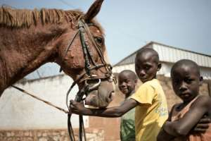 Friends: Neighbourhood children get to know Dida's horse in a street in Bangui.  By FLORENT VERGNES (AFP)