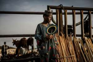 Hawker: A Fulani man selling herdsmen's sticks waits for costumers at the Agege cattle market.  By Luis TATO (AFP)