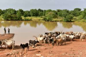 Herders say there are areas of northern and eastern Burkina Faso where they are afraid to graze their cattle due to presence of jihadist groups.  By ISSOUF SANOGO (AFP/File)