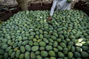 How many mangoes do you see?. By Mohamed el-Shahed (AFP)
