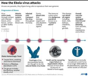 Factfile on how the Ebola virus attacks.. By John Saeki/Adrian Leung (AFP)