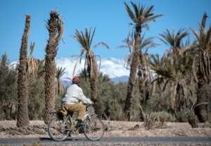 In the oasis of Skoura in Morocco's arid southeast where once pomegranate and apple trees flourished according to resident, palm trees are dying and the ground is mostly dry and cracked.  By FADEL SENNA (AFP)