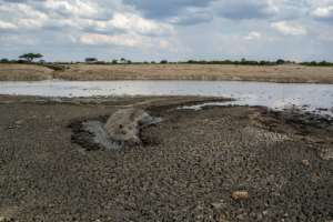 In this file photo taken on November 12, 2019 a hippo is stuck in the mud at a drying watering hole in the Hwange National Park, in Zimbabwe..  By ZINYANGE AUNTONY (AFP/File)