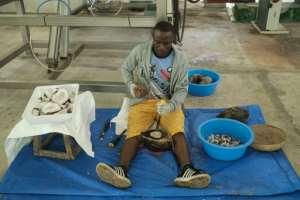 It can take half an hour to crack open a coco de mer.  By Yasuyoshi CHIBA (AFP)