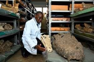 Kenyan paleontologist Job Kibii says there are
