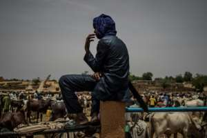 Many Fulani have had to abandon herding and settle down in towns in bid to feed their families.  By Marco LONGARI (AFP)