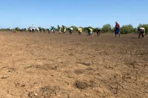 Madagascar, which hosts about two percent of the world's mangroves, has lost a fifth of them between 1990 and 2010, a study found.  By Laure FILLON (AFP)
