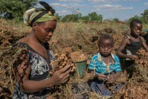 Malawi is ranked by the World Bank as one of the poorest countries in the world.  By AMOS GUMULIRA (AFP)