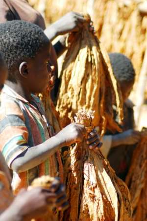 Malawian children carrying tobacco leaves on a farm in 2009. A government survey conducted two years ago found that more than one in three childen work.  By FELIX MPONDA (AFP/File)