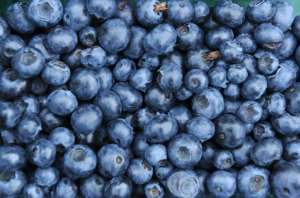 More than 90 percent of South Africa's blueberries are sold abroad, mainly in Europe and Britain.  By CAROLINE SEIDEL (DPA/AFP/File)