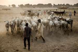 Nigeria's President Muhammadu Buhari has been accused of backing herders. By Luis TATO (AFP)