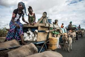 Nomadic life: A Fulani pastoralist carries lambs in her donkey cart as her community heads north.  By JOHN WESSELS (AFP)