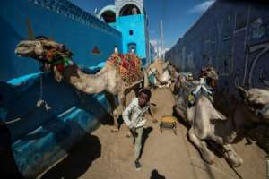 Nubian boys lead camels along an alley -- the Nubian language lives on in two dialects but the written language was gradually abandoned over centuries.  By Khaled DESOUKI (AFP)