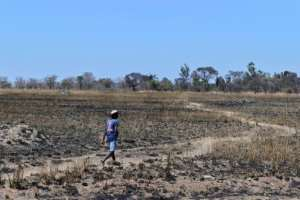 Of the 4,200 white farmers counted in Zimbabwe's last population census in 2000, only 400 work land in Zimbabwe, according to Freeth.  By TONY KARUMBA (AFP)