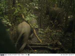 Omo, spreading across some 1,325 square kilometres of southwestern Ogun state in Nigeria, was protected as a government reserve nearly a century ago and is home to forest elephants.  By Handout (Omo Forest Initiative/AFP)