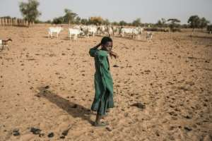 Pastoralists move with their cattle from north to south across Louga as pasture dries up.  By JOHN WESSELS (AFP)