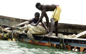 Senegalese fishermen rescue a sea turtle from their nets and return it to the sea.  By Seyllou (AFP)