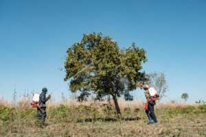 Soldiers have been deployed in Uganda to spray trees and savannas in a bid to beat back the infestation.  By SUMY SADURNI (AFP)