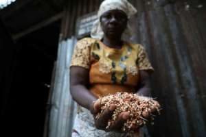 Sorghum, along with millet, provides the ooomph to burukutu.  By Kola Sulaimon (AFP)