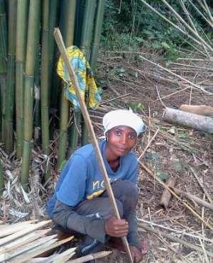 Bamboo Farmers