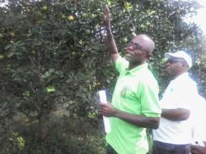 Stakeholders recommend solution to challenges in Ghana's citrus industry