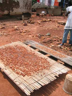 Cocoa Farmers in Ghana Get a Sweeter Deal With US Chocolate Launch