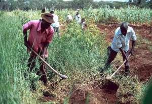 Agriculture The Backbone Of Ghana