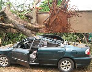 An unprooted tree. INSET: A damaged car