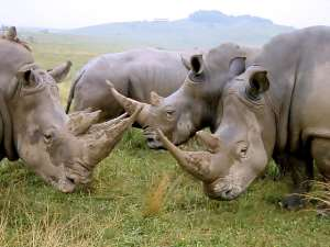 Two Translocated Rhinos Give Birth In Assam's Manas National Park